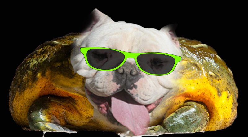 http://www.toadline.com/toadfrogdog.jpg